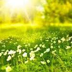 Wiosna, obrazek